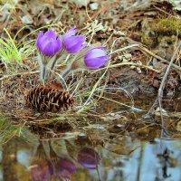 весна пришла... :: Александр