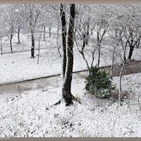 Прийшла зима :: Степан Карачко