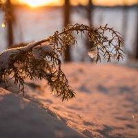у замерзшего озера :: Михаил Денисов