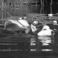 охота на уток :: Светлана Прилуцких