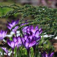 Яркая весна :: Виктория Смирнова