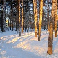 Закатное освещение. :: Мила Бовкун
