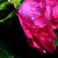 После дождя... :: Валерия  Полещикова