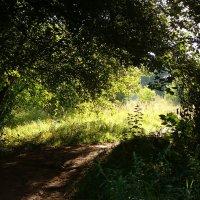 Лесными дорогами :: Grey Bishop