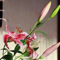 Любимые цветы :: Виктор Коршунов