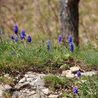 Весна идет... :: Олеся Енина