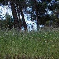 лесная трава :: evgeni vaizer