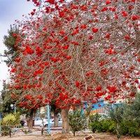 Весна в городе :: Валерий Цингауз