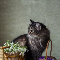 Весенний кот :: Ирина Приходько