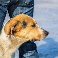 Человек - собаке друг!)))))) :: игорь козельцев