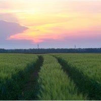 На пути к закату... :: Райская птица Бородина