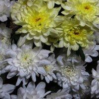Настроение в цветочек!!! :: Ирина Олехнович