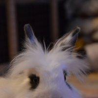 наш кролик :: Сергей Симановский