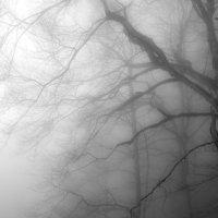 Туман :: Алексей Окунеев