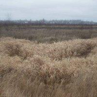 осенние травы :: Владимир Безгрешнов