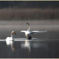 объяснение в тумане :: liudmila drake
