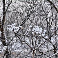 зима нас не покинула.ночью выпал снег. :: Юрий Ефимов