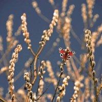 Мартовский всплеск весны :: НАТАЛИ natali-t8