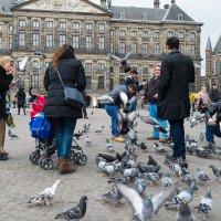 Амстердамский стрит.3 :: Антон Смульский