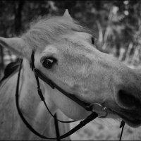 Портрет Гренады :: Дмитрий Конев