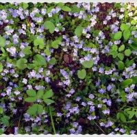 Голубой газон :: Svetlana27