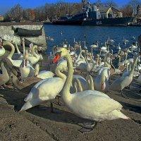 Февральские птицы :: Сергей Карачин