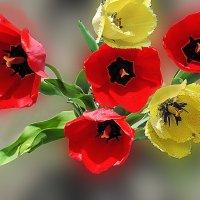 тюльпаны :: георгий  петькун