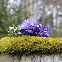 И даже пень в апрельский день.. :: Mariya laimite