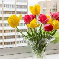 Тюльпаны :: Elena Ignatova