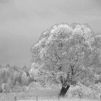 Большое одиночество :: Svetlana AS