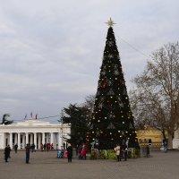 Новогодний Севастополь :: Zinaida Belaniuk