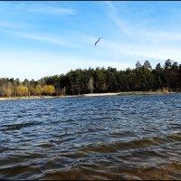 Лесное озеро :: Владимир Бровко