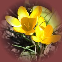 Весенние цветы :: Raisa Ivanova