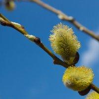 Весна :: Евгений Меркулов