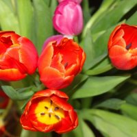 Весна! :: Людмила