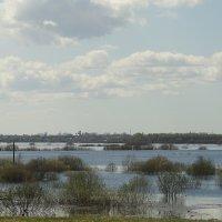 Заливные луга вокруг реки Волхов :: Елена Павлова (Смолова)