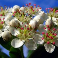 Цветущая Весна. :: оля san-alondra