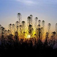 Майский закат 3 :: Руслан Веселов