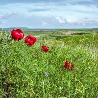 Опять весна... :: Владимир Натальченко