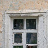 Кошка у окошка :: Алексей Шаповалов Стерх