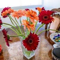цветы :: Valera Kozlov