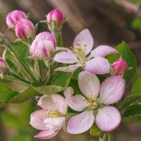 Весна, однако! :: Gennady Karvitsky