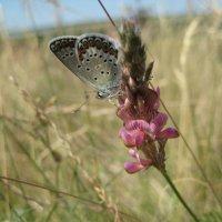 бабочка :: Мария Пашкова