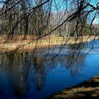 Весенний пруд в Павловском парке. :: Наталья Лунева