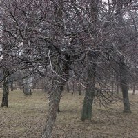 Весна похожая на осень. :: Елена Дёмина