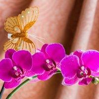 Орхидея :: Сергей Sha