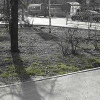 Первая травка :: Валерий Цуркан