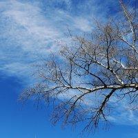 Ветви тянутся к облакам :: Юрий Гайворонский