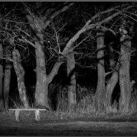 У старых дубов! :: Владимир Шошин