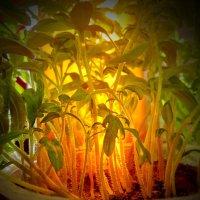 Будущий урожай :: Валерий Талашов